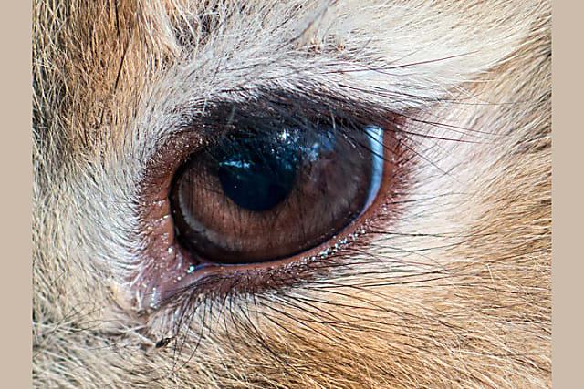 Nhìn mắt nhận biết con vật gì - 7