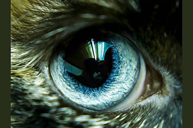 Nhìn mắt nhận biết con vật gì - 9