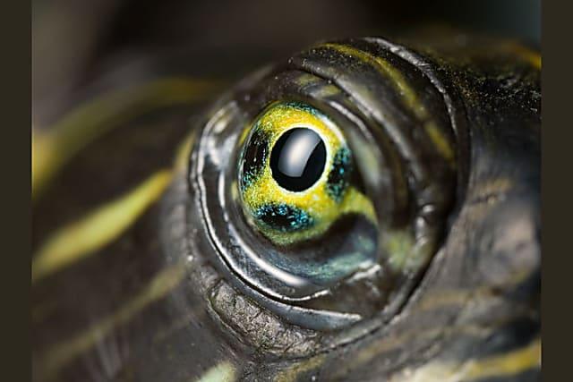 Nhìn mắt nhận biết con vật gì - 11