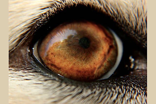 Nhìn mắt nhận biết con vật gì - 13