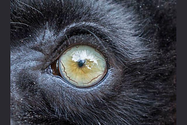 Nhìn mắt nhận biết con vật gì - 15