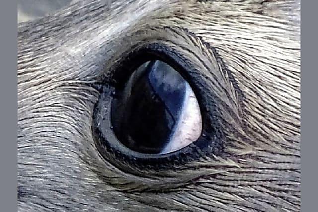 Nhìn mắt nhận biết con vật gì - 17