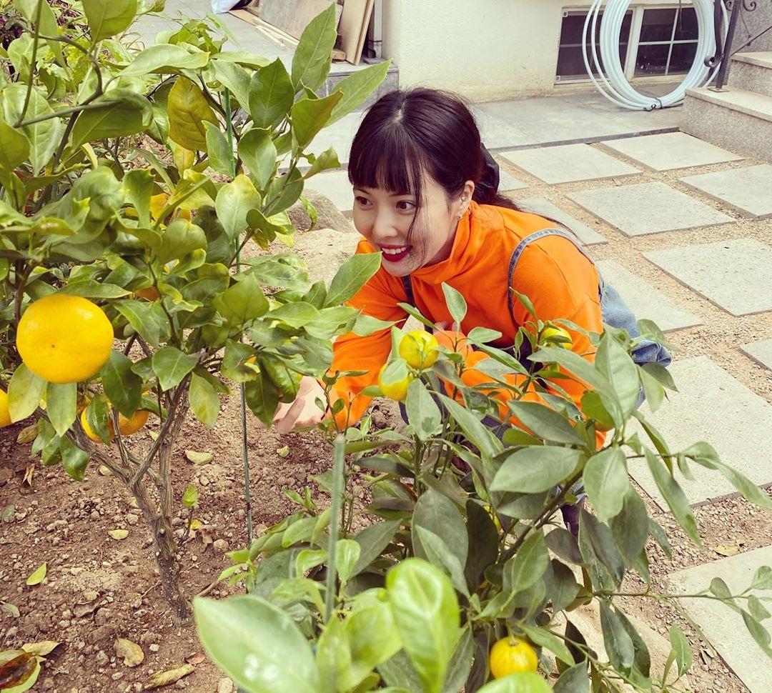 Hyuna mắt sáng rực khi nhìn thấy những trái cam trĩu cành.