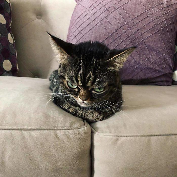 Cô mèo có gương mặt đanh đá, hận đời - 5