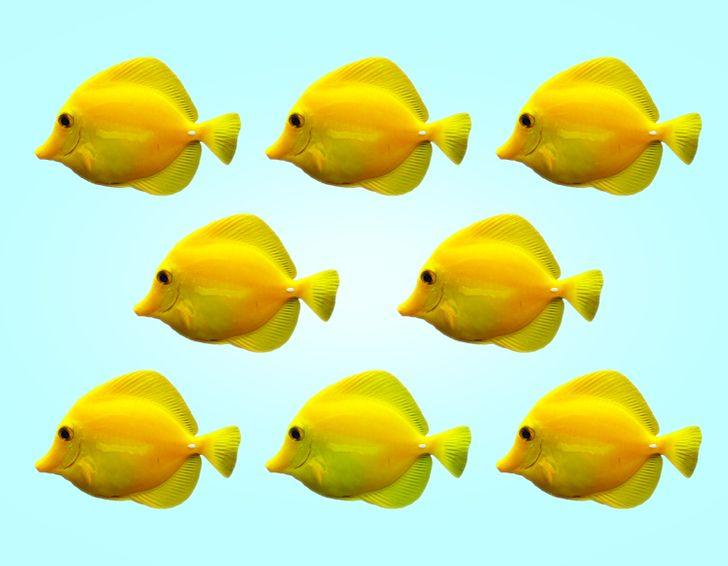 Thị lực hoàn hảo chọn con cá có màu sắc khác lạ