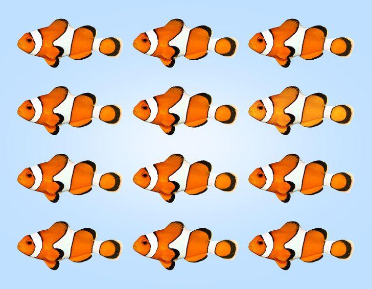 Thị lực hoàn hảo chọn con cá có màu sắc khác lạ - 2
