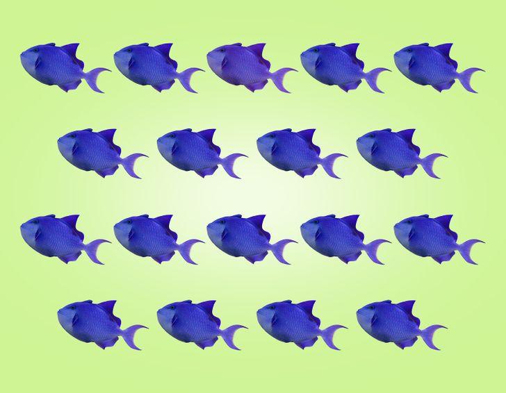 Thị lực hoàn hảo chọn con cá có màu sắc khác lạ - 6