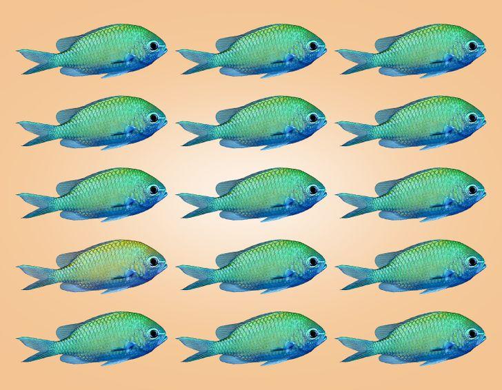 Thị lực hoàn hảo chọn con cá có màu sắc khác lạ - 8
