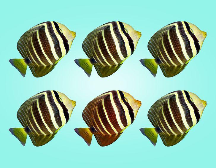 Thị lực hoàn hảo chọn con cá có màu sắc khác lạ - 10