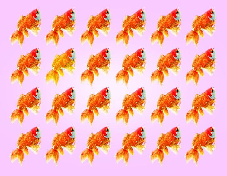 Thị lực hoàn hảo chọn con cá có màu sắc khác lạ - 12