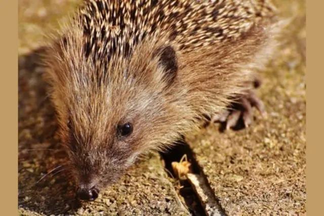 Trong tiếng Anh, các đàn động vật được gọi là gì? - 9