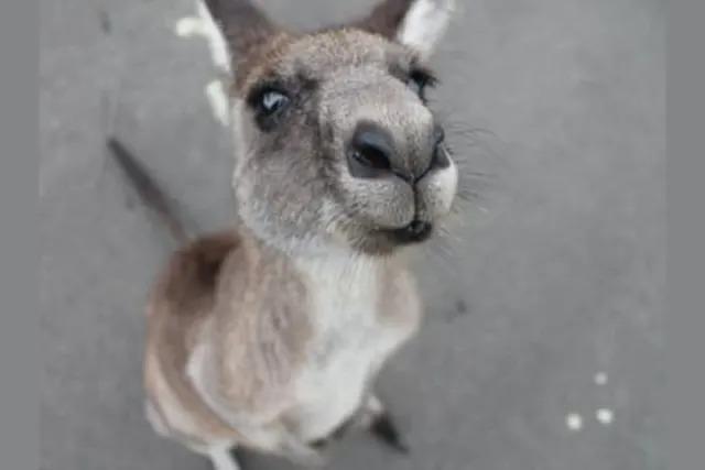 Trong tiếng Anh, các đàn động vật được gọi là gì? - 11