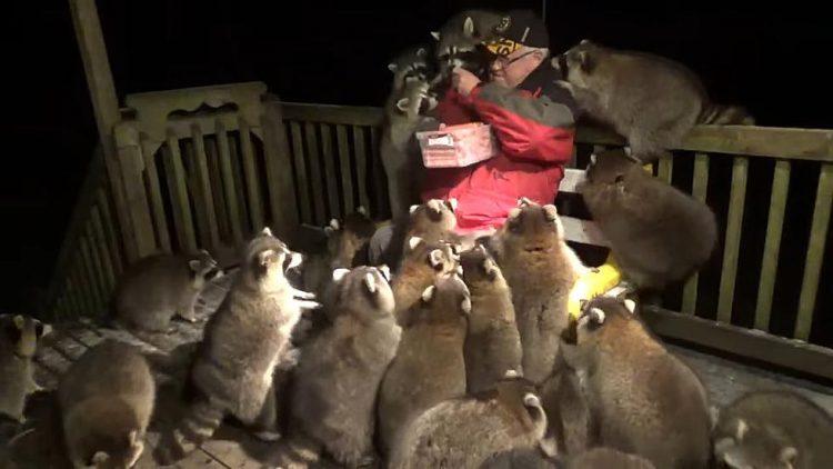 Góc xin ăn quen mồm: Đàn gấu mèo hò nhau đến đợi cửa nhà chờ được cho