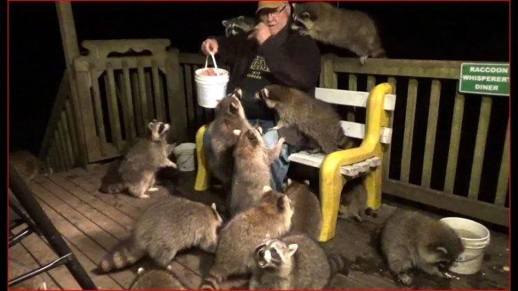 Góc xin ăn quen mồm: Đàn gấu mèo hò nhau đến đợi cửa nhà chờ được cho - 2