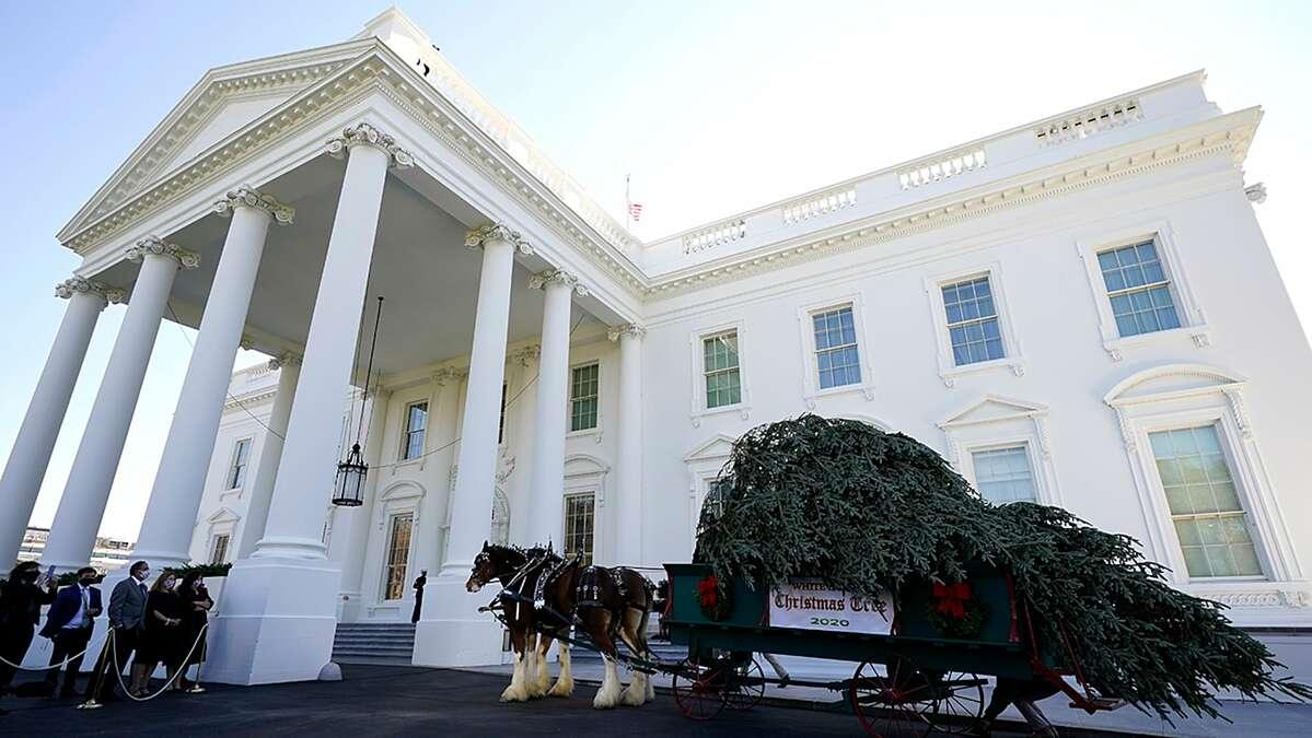 Xe ngựa chở cây thông Noel đến Nhà Trắng.