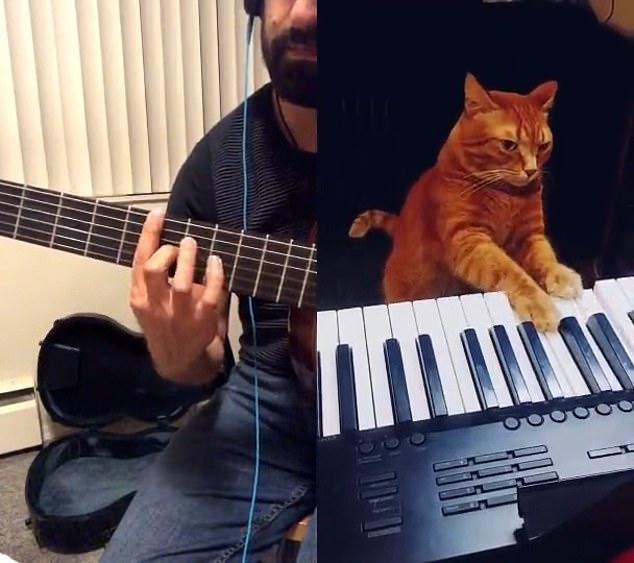 Chú mèo Barney đệm đàn cho chủ chơi guitar.