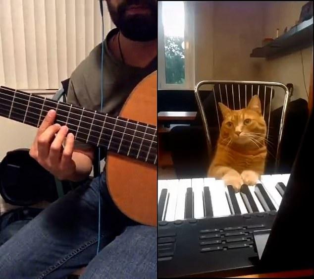 Một khoảnh khắc đáng yêu của mèo cưng.