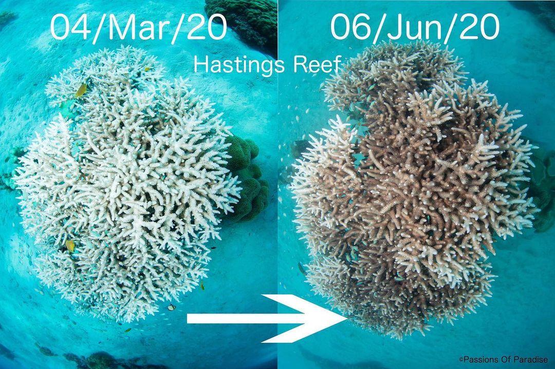 Rạn san hô phục hồi rõ rệt.