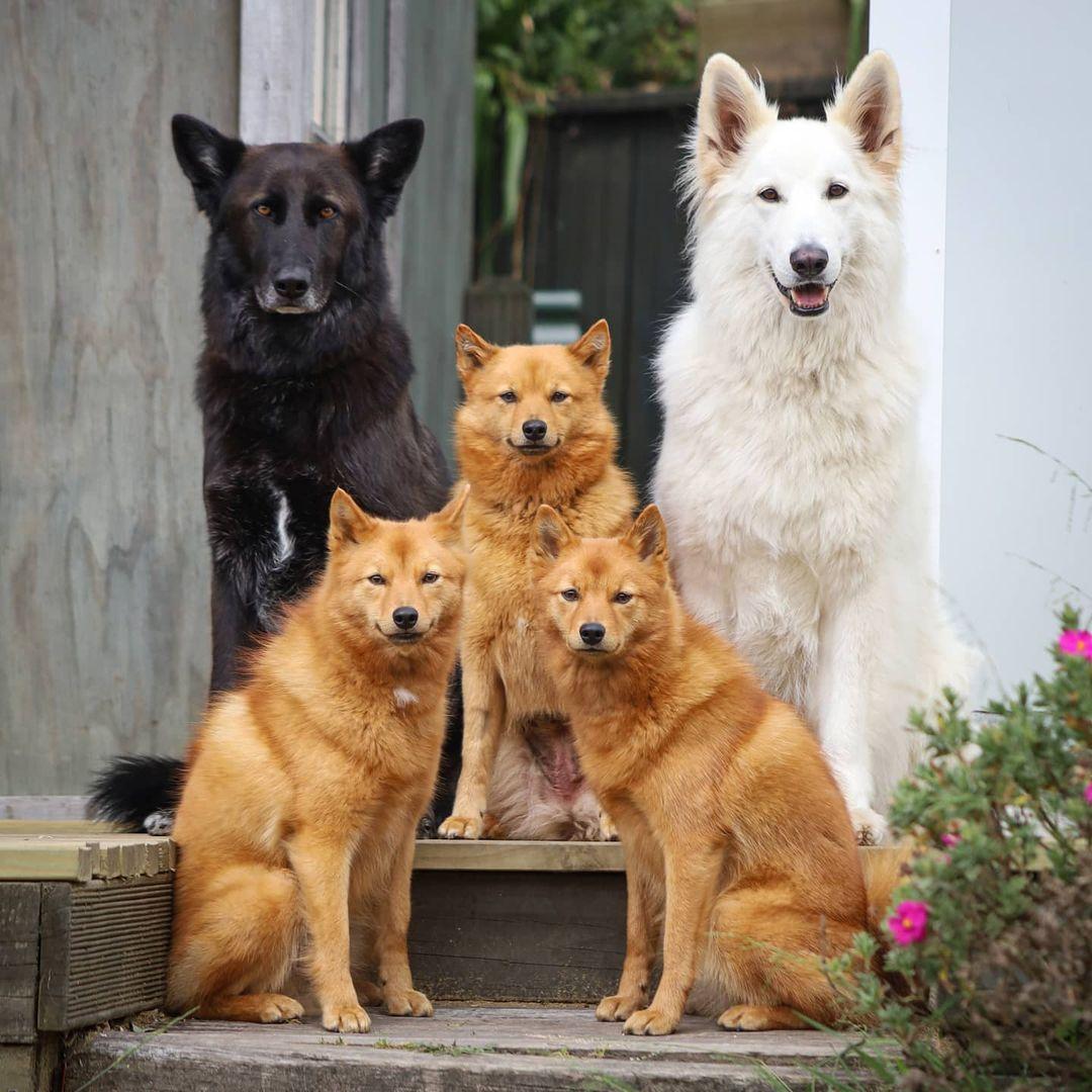 Bức ảnh chụp cùng gia đình tử tế nhất của Kiko.