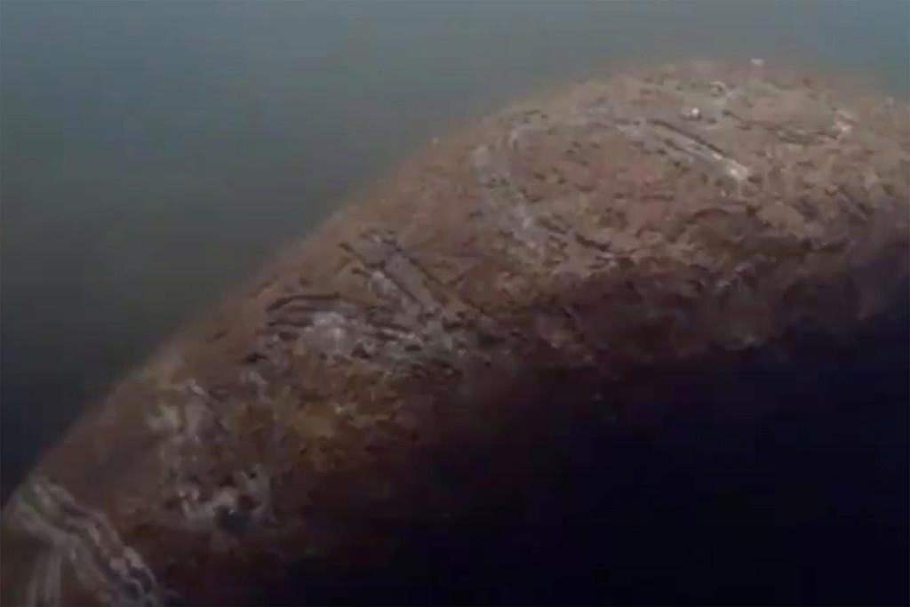 Truy tìm thủ phạm khắc chữ Trump lên lưng lợn biển - 1
