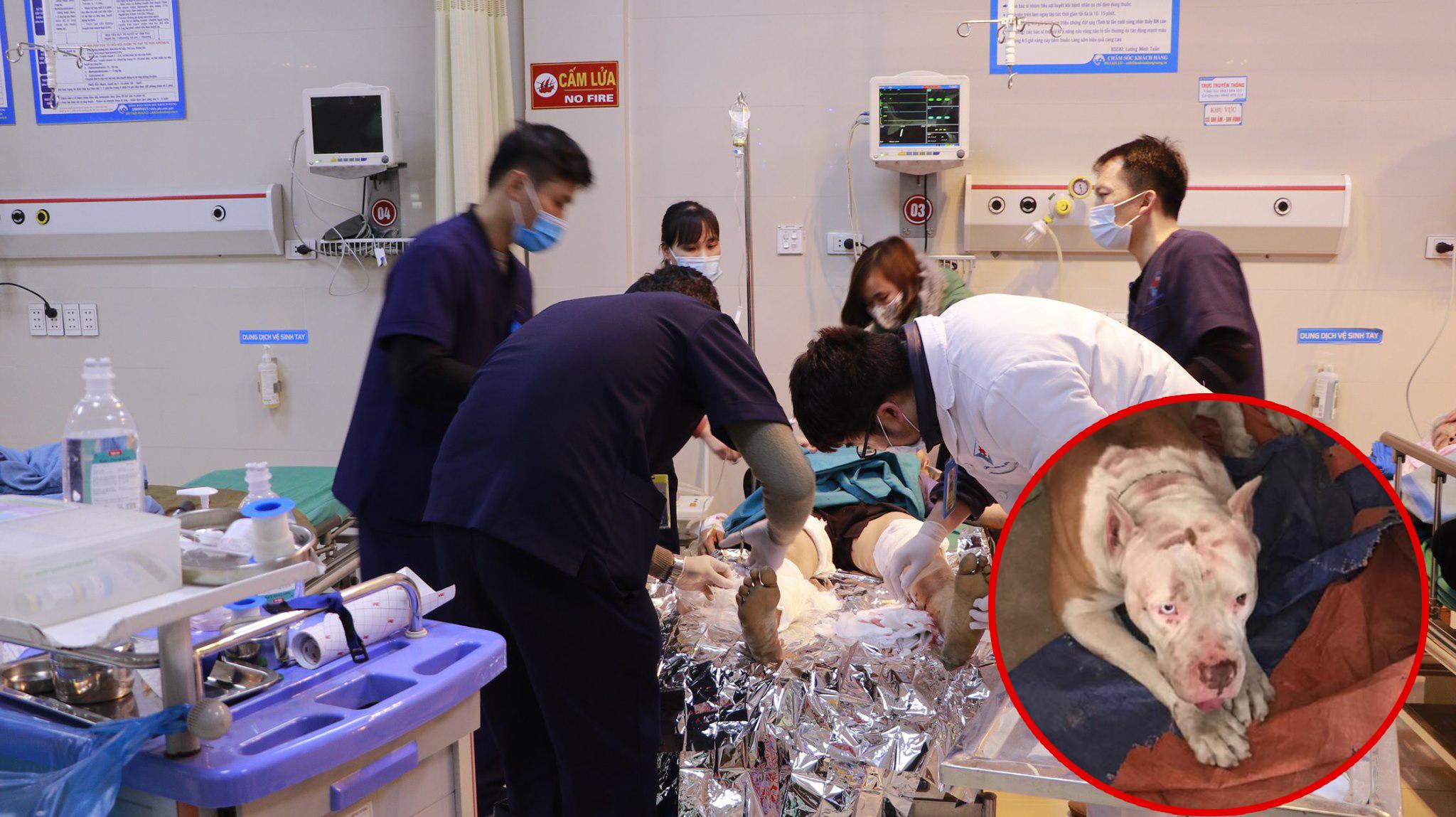 Nữ công nhân bị chó Pitbull nhà chủ cắn nát tay chân. Ảnh: Bệnh viện cung cấp