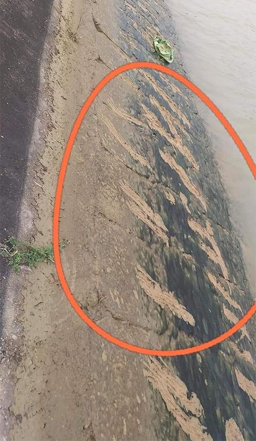 Vết cào vào lớp rong rêu ở bờ sông được xác định do em Huy để lại lúc vừa rơi xuống sông. Ảnh: CTV