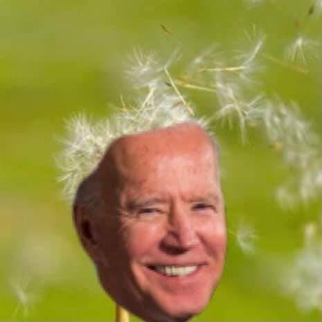 Tóc Biden bị đem ra chế ảnh.