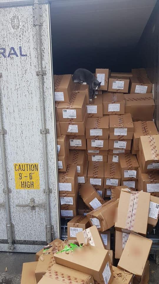 Mèo nhỏ vô tình bị nhốt trong container đầy hàng suốt 3 tuần.