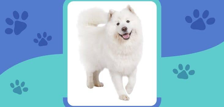 Đây là giống chó gì?