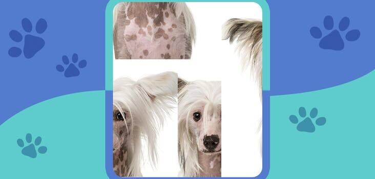 Đây là giống chó gì? - 10
