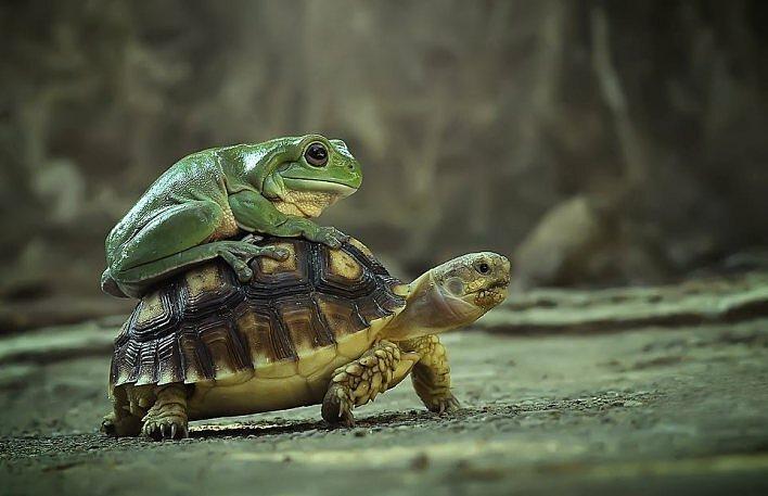 Ếch cũng đi grab rùa khiến bạn phải bật cười