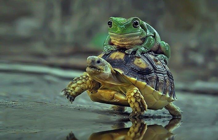 Con rùa nhấc chân khỏi mặt đất và di chuyển.