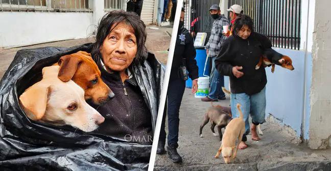 Những con chó được bà Chole rất yêu mến.