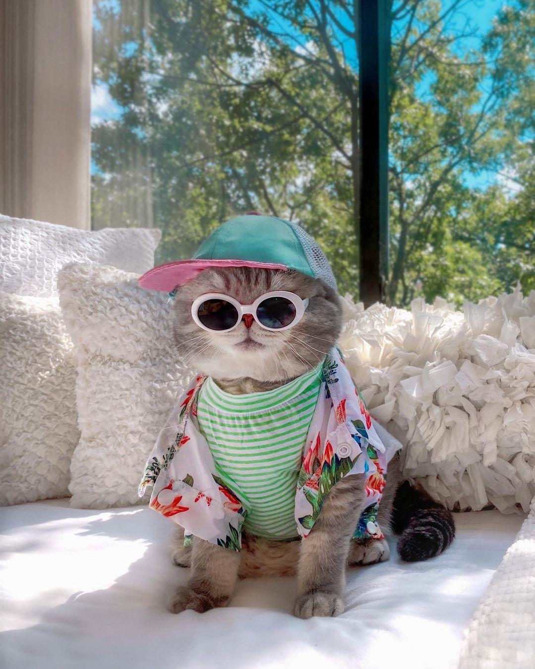 Thời trang đi biển của chú mèo UAE rất bắt mắt và mát mẻ.