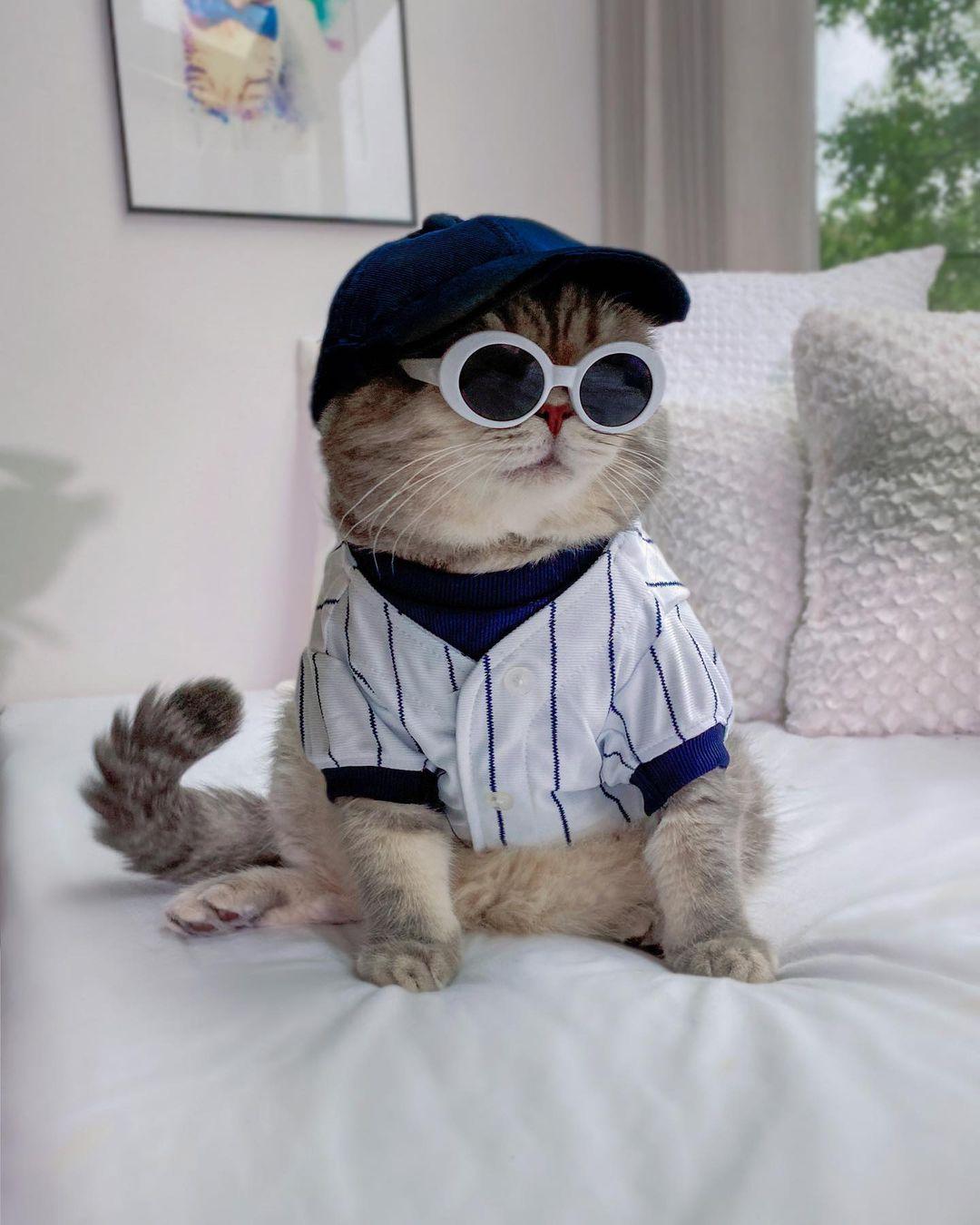 Kính râm và mũ là hai phụ kiện ưa chuộng của Benson. Trong ảnh, chú mèo gây ấn tượng với bộ đồ vận động viên bóng chày chuyên nghiệp.
