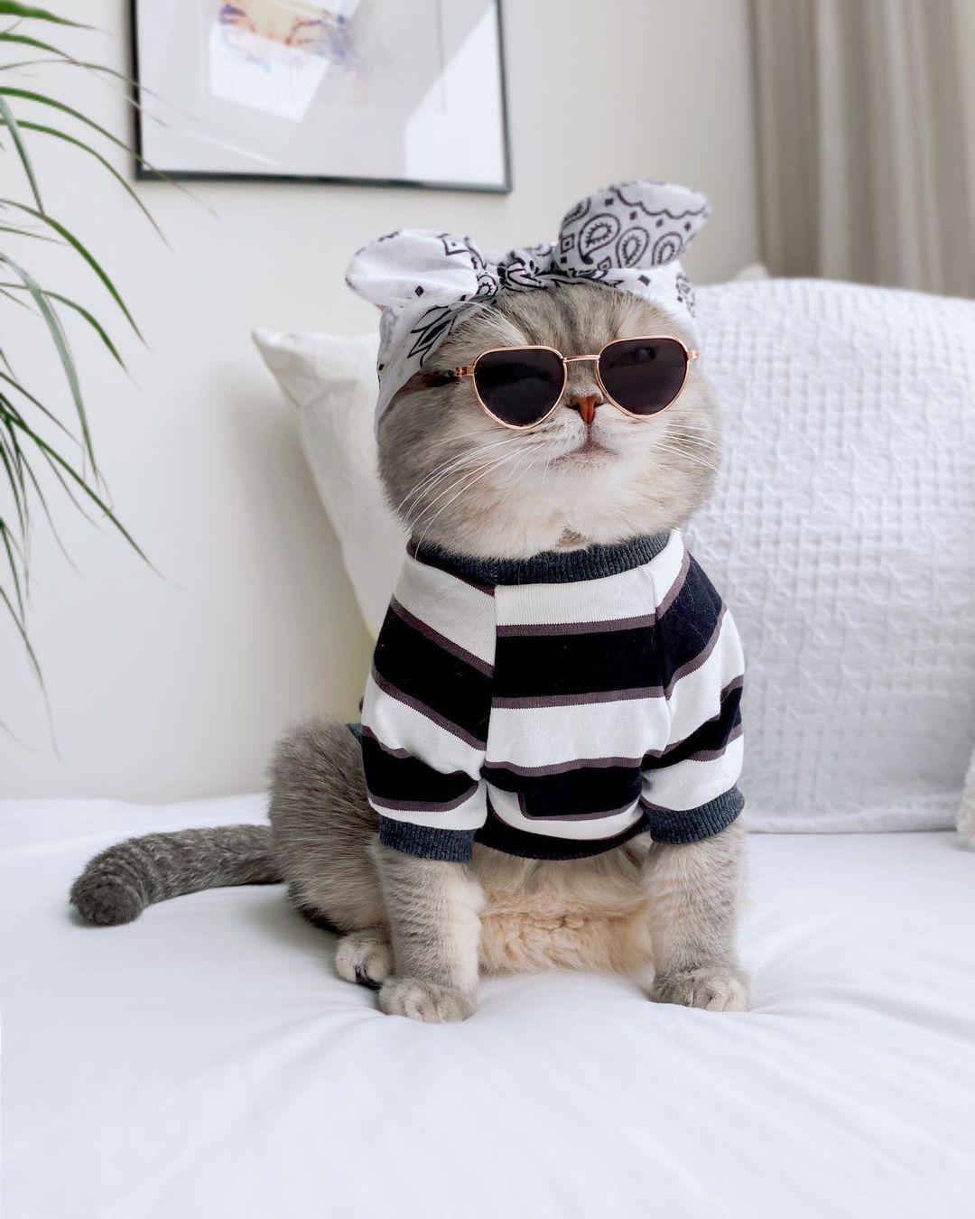 Benson là chú mèo sinh ra ở UAE và lớn lên ở Mỹ. Hiện là một ngôi sao nổi tiếng trên Instagram với hơn 111.000 người theo dõi.