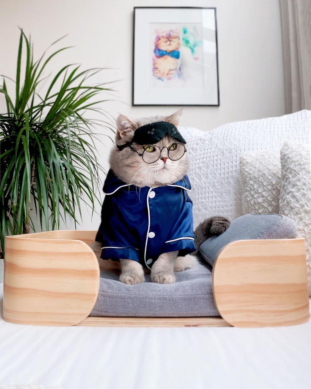 Chú mèo này được sen chuẩn bị cho cả tủ đồ, với mẫu mã, chất liệu phong phú, đi kèm các phụ kiện tông xuyệt tông.