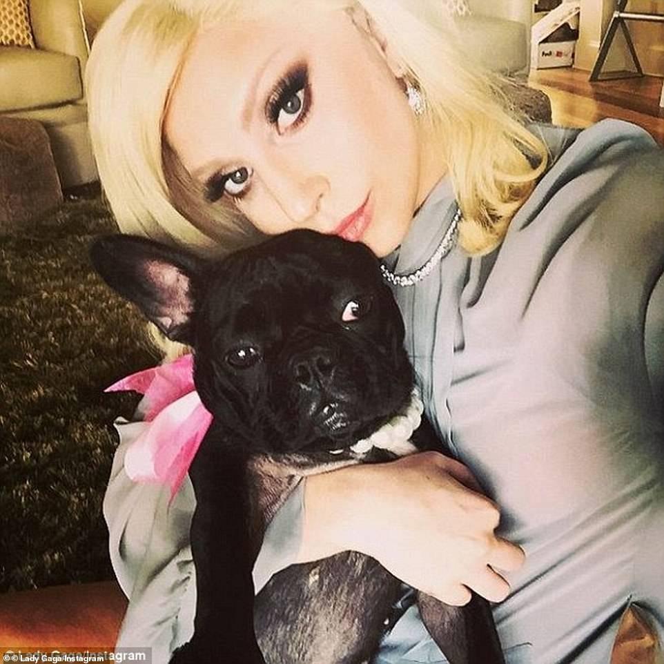 Lady Gaga rất cưng chiều các chú chó của mình. Khi vụ án xảy ra, cô đang tại Italy quay phim House of Gucci. Cô đau lòng, suy sụp và treo thưởng 500.000 USD cho ai tìm thấy chúng.