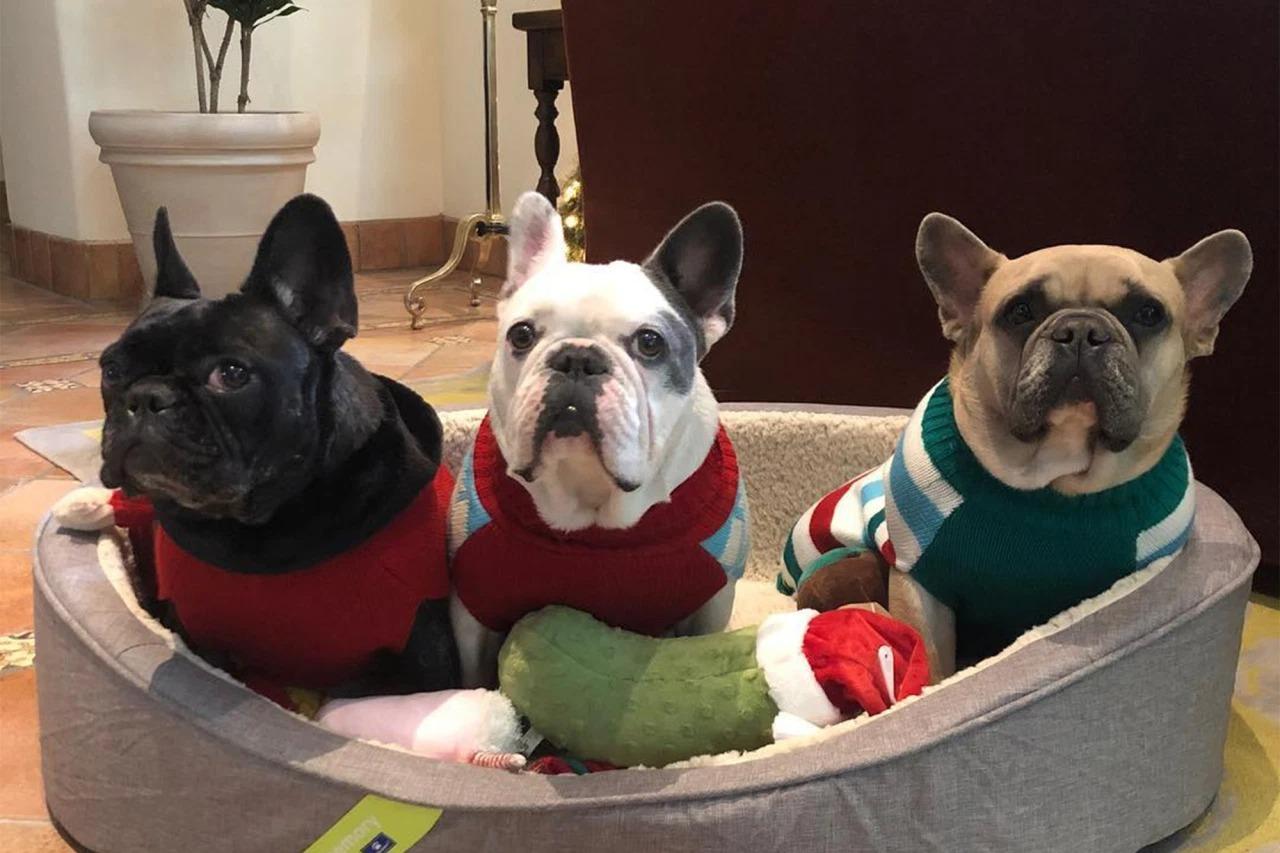 Ba cún cưng của Lady Gaga.