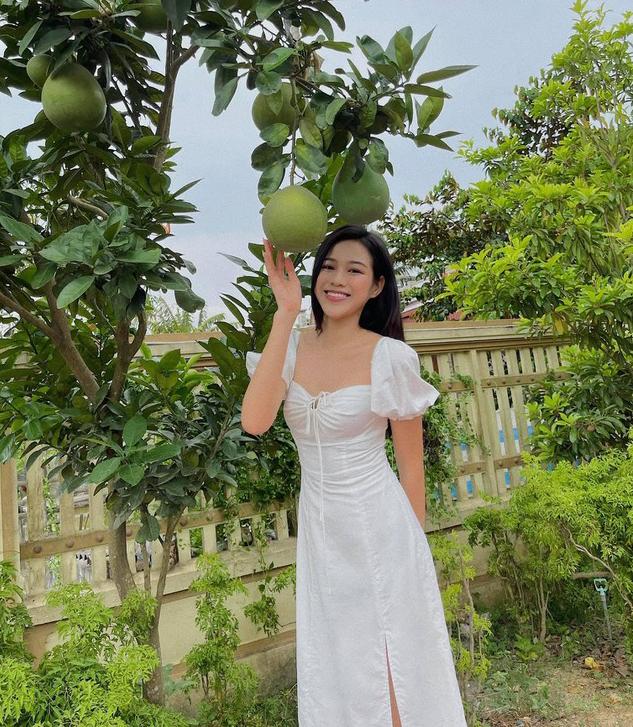 Hoa hậu Đỗ Thị Hà về quê tránh dịch. Cô diện chiếc váy trắng xinh xắn, tạo dáng bên cây bưởi trong vườn.