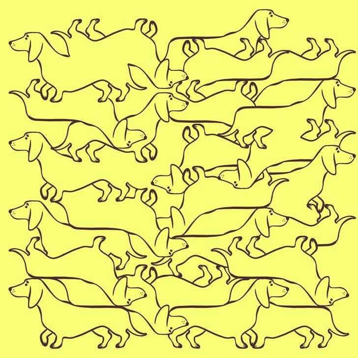 Test thị giác: Tìm những con vật hoàn chỉnh trong ảnh - 4