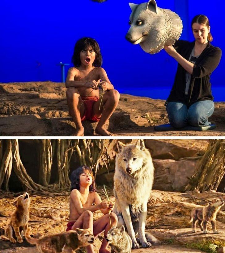 Cô sói trong The Jungle Book live action thực chất trông như thế này. Diễn viên không cần mạo hiểm diễn với sói thật.