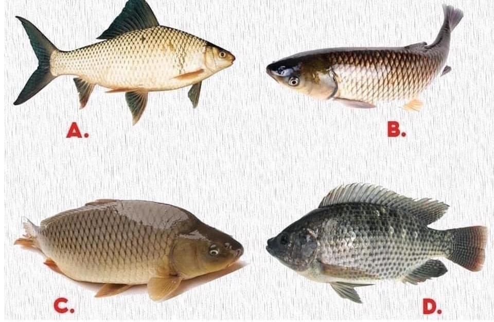 Gen Z có thể phân biệt các loại cá?