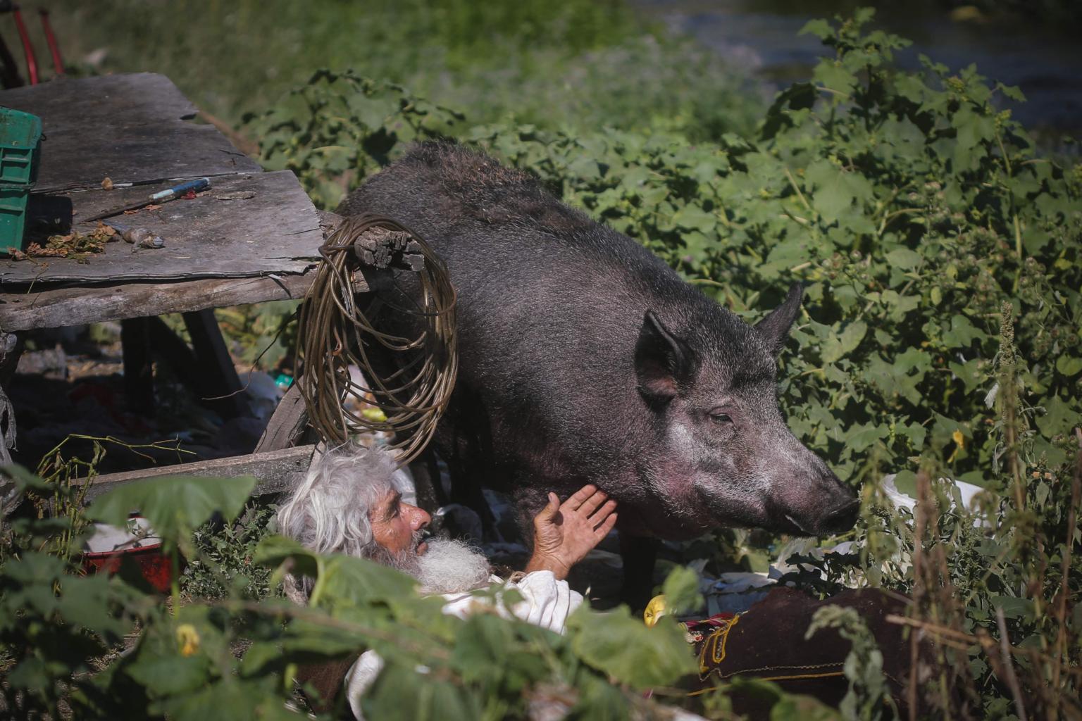 Vị ẩn sĩ 70 tuổi chủ yếu ăn nấm và cá từ con lạch địa phương. Thi thoảng ông đi bộ xuống trung tâm thị trấn, tìm kiếm thức ăn thừa trong thùng tác. Gần đây, ông xuống núi thường xuyên hơn. Ông có nuôi đàn dê, gà và khoảng 30 con chó và mèo - những động vật mà ông yêu thích. Trong đó có con lợn rừng trưởng thành Mara rất được cưng chiều. Ông Petrovic tìm thấy nó cách đây 8 năm và đem về nuôi. Tôi rất yêu Mara và nó rất nghe lời. Với tôi không có tiền bạc nào mua được con vật cưng thực sự thế này, ông nói.