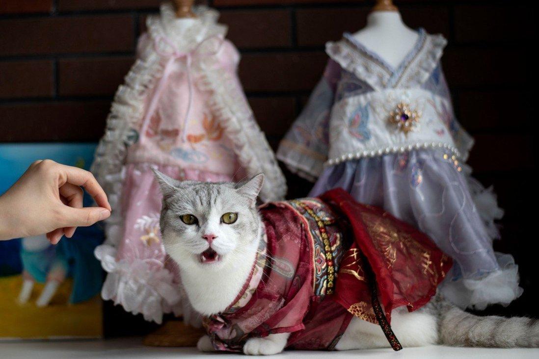Thú cưng mặc bộ đồ Hanfu truyền thống. Ảnh: AFP