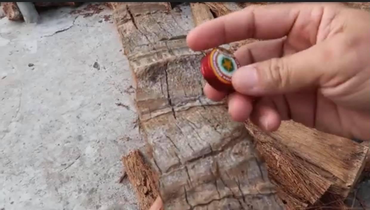 Chà xát nhiều lần vào thân cây dừa.