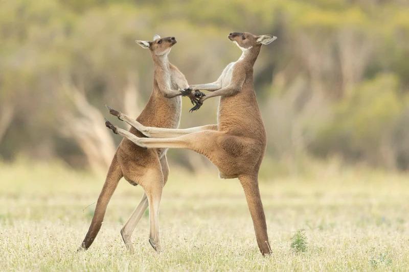Những khoảnh khắc cười không đỡ nổi của hội động vật hoang dã  - 6