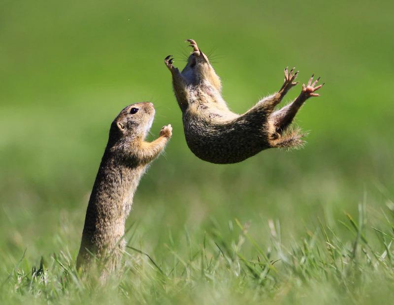 Những khoảnh khắc cười không đỡ nổi của hội động vật hoang dã  - 8