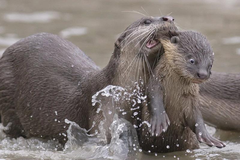 Những khoảnh khắc cười không đỡ nổi của hội động vật hoang dã  - 9