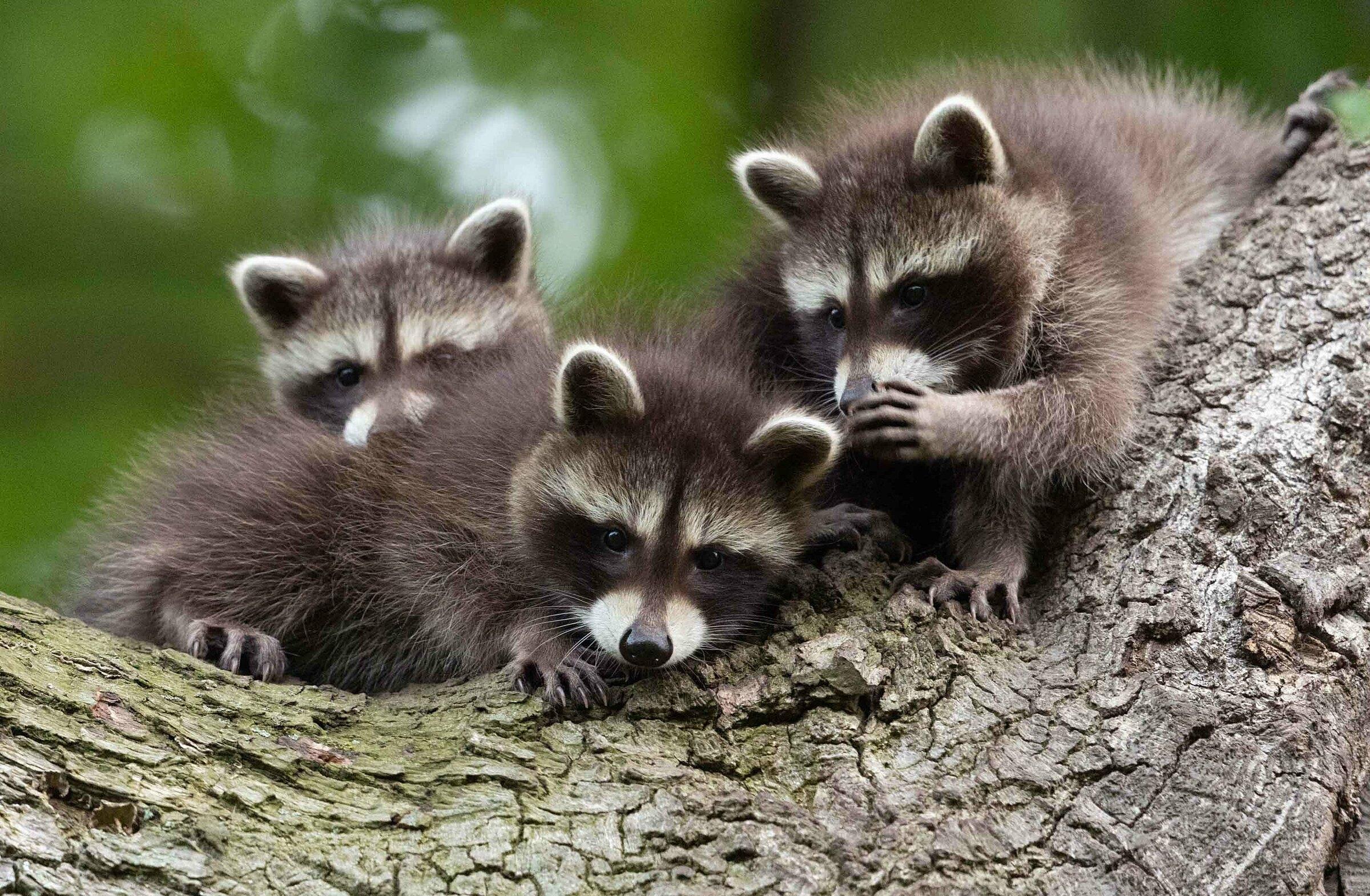 Những khoảnh khắc cười không đỡ nổi của hội động vật hoang dã  - 5